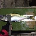 HIUさんの広島県呉市での釣果写真