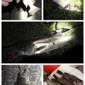 しださんの兵庫県高砂市でのメバルの釣果写真