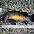 ジーン さんの千葉県南房総市での釣果写真