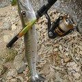 高良ケンタウルス隆太さんの沖縄県豊見城市での釣果写真