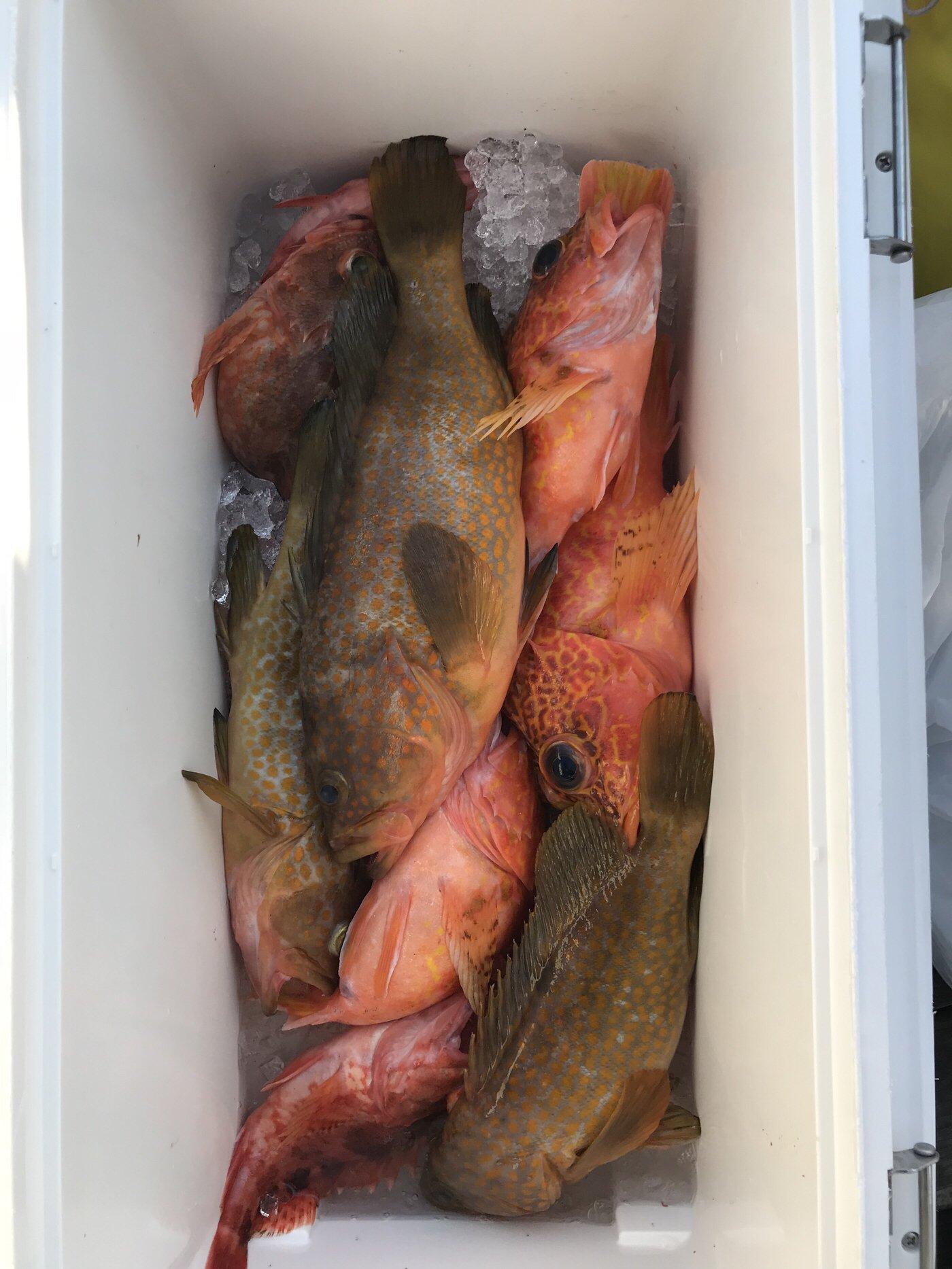 マリンマリンマリンさんの投稿画像,写っている魚はカサゴ