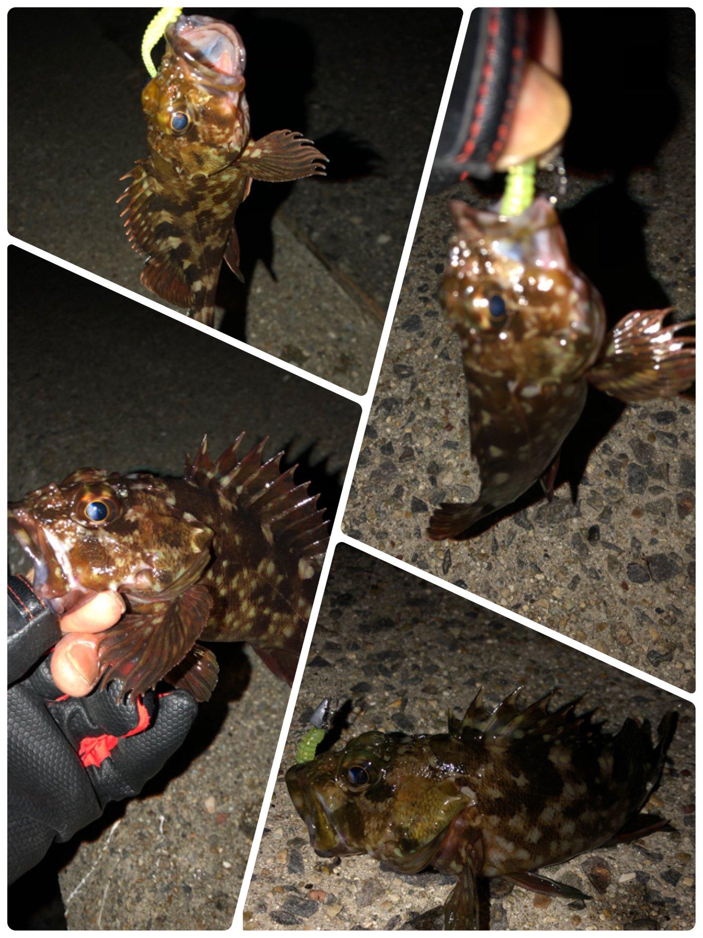 ポールさんの投稿画像,写っている魚はカサゴ