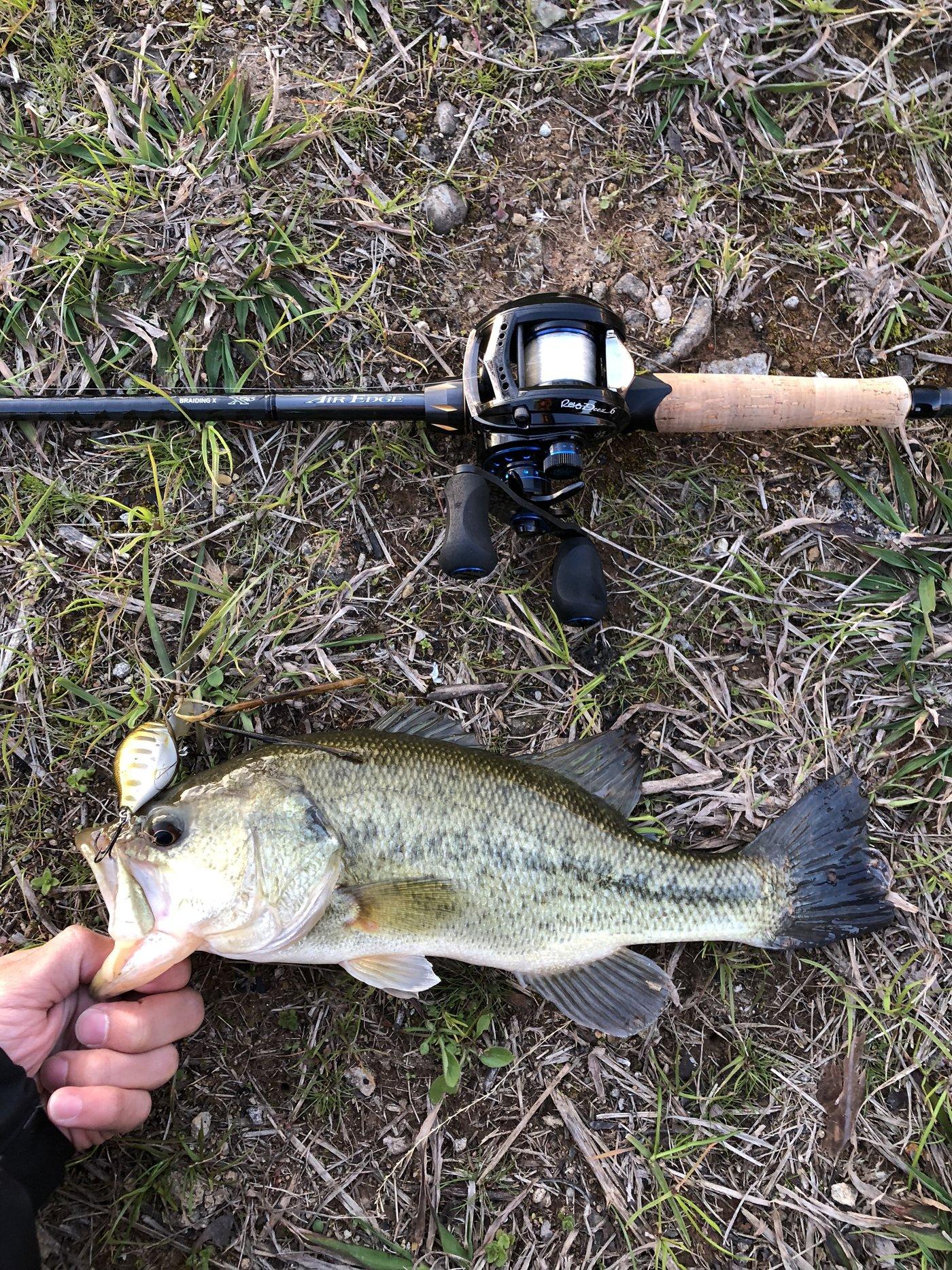 ラテス81さんの投稿画像,写っている魚はブラックバス