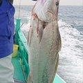 KS(KurodaiSuki)さんの千葉県習志野市での釣果写真