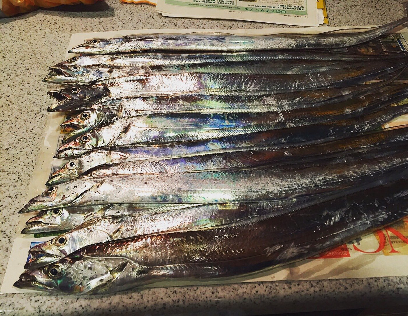 k.isseyさんの投稿画像,写っている魚はタチウオ