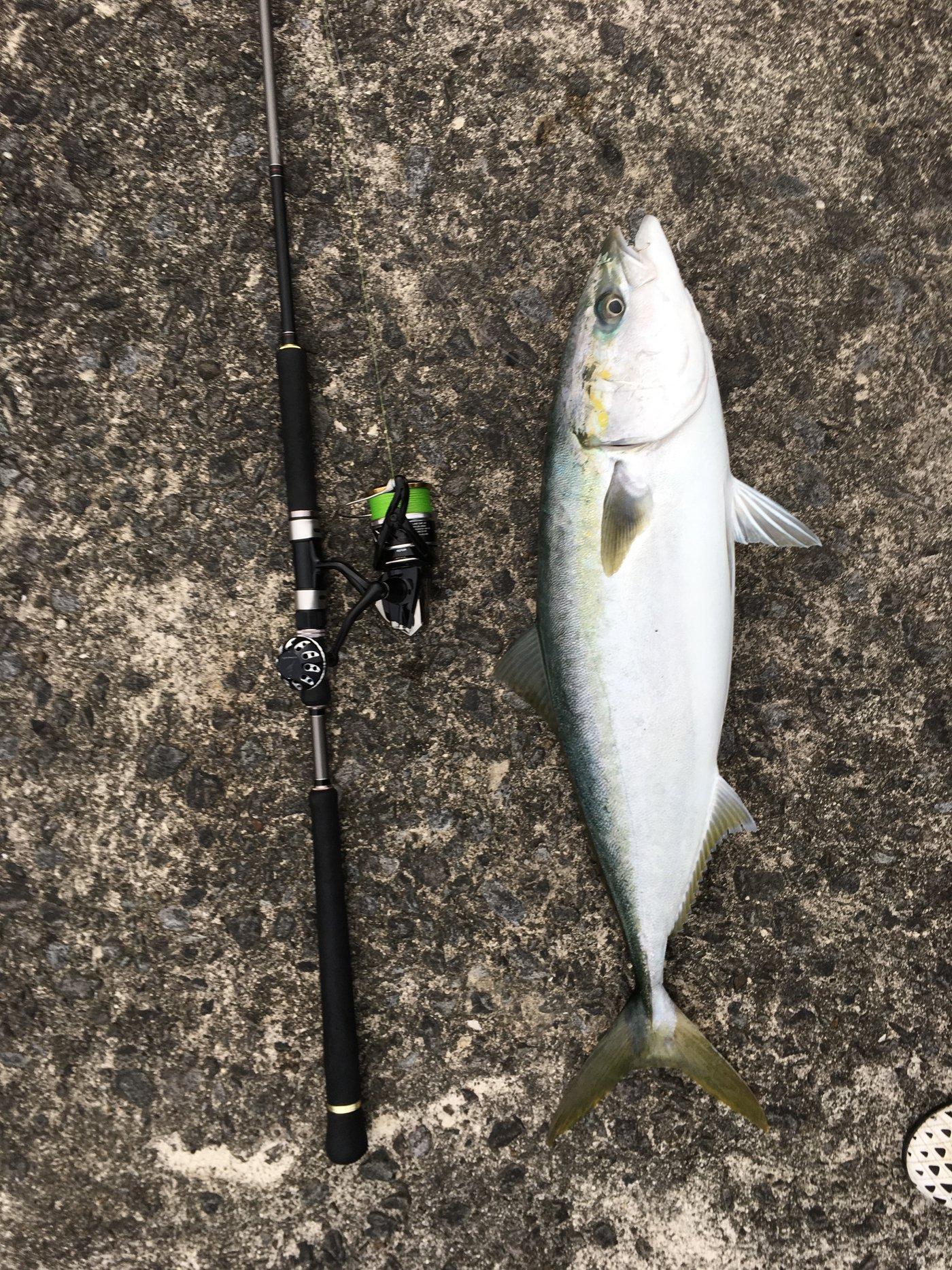 健斗さんの投稿画像,写っている魚はブリ
