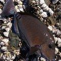 こがしゅうさんの鹿児島県指宿市での釣果写真