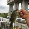 あっくんさんの千葉県野田市での釣果写真