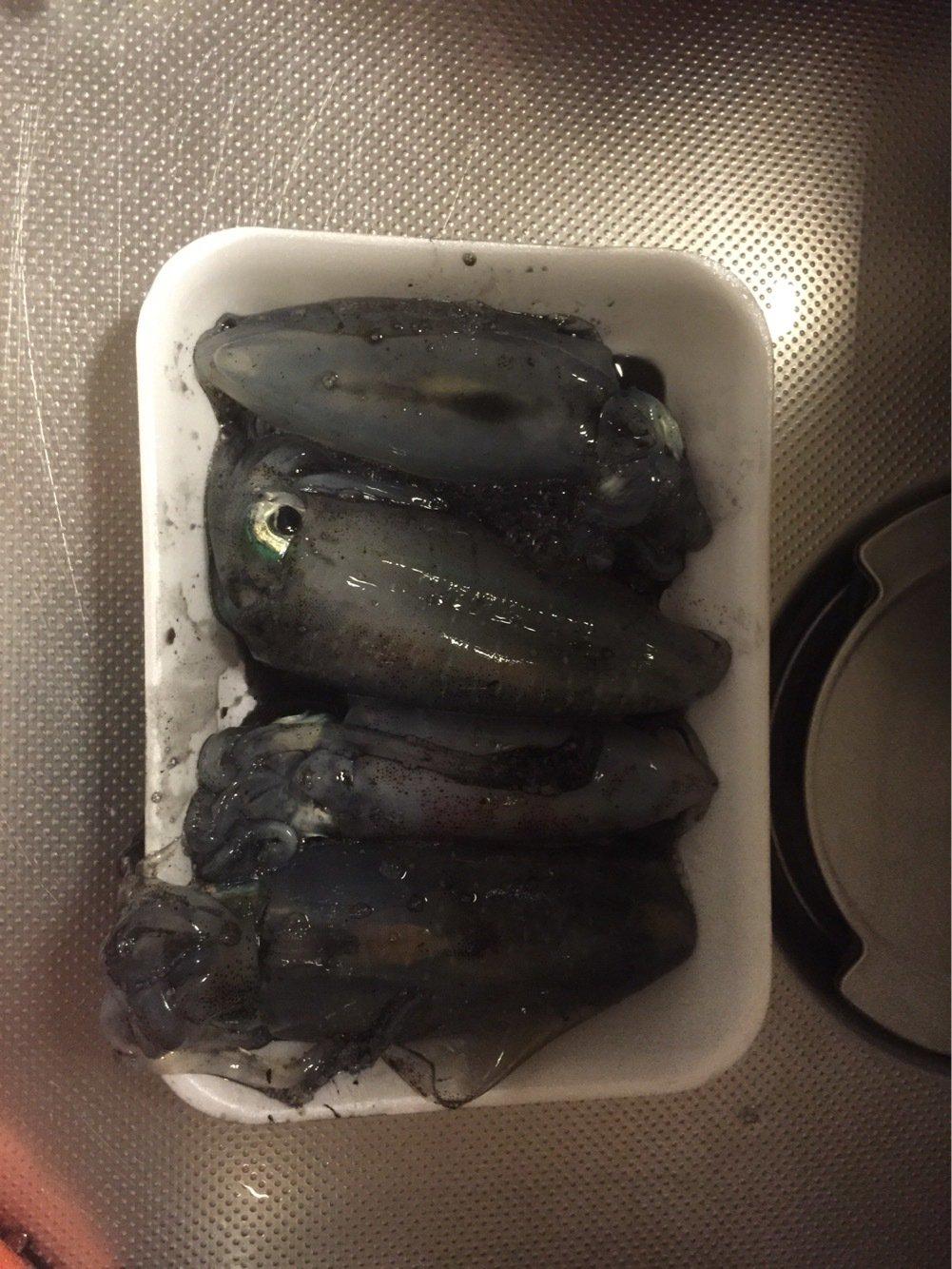 テリーさんの投稿画像,写っている魚はアオリイカ