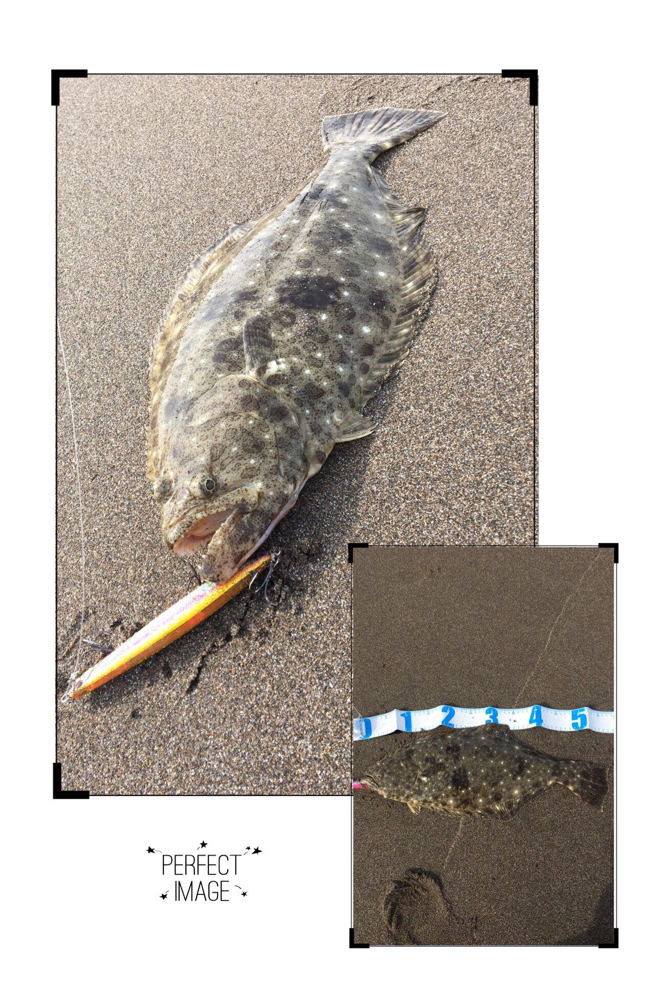 さよ*ˊᵕˋ)੭さんの投稿画像,写っている魚はヒラメ