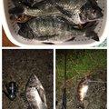 ぽちさんの新潟県佐渡市での釣果写真