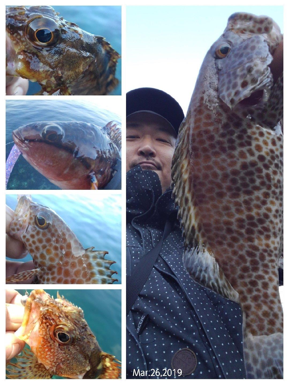 KRO さんの投稿画像,写っている魚はカサゴ,アカササノハベラ,オオモンハタ