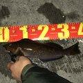 おまさんの宮城県気仙沼市での釣果写真