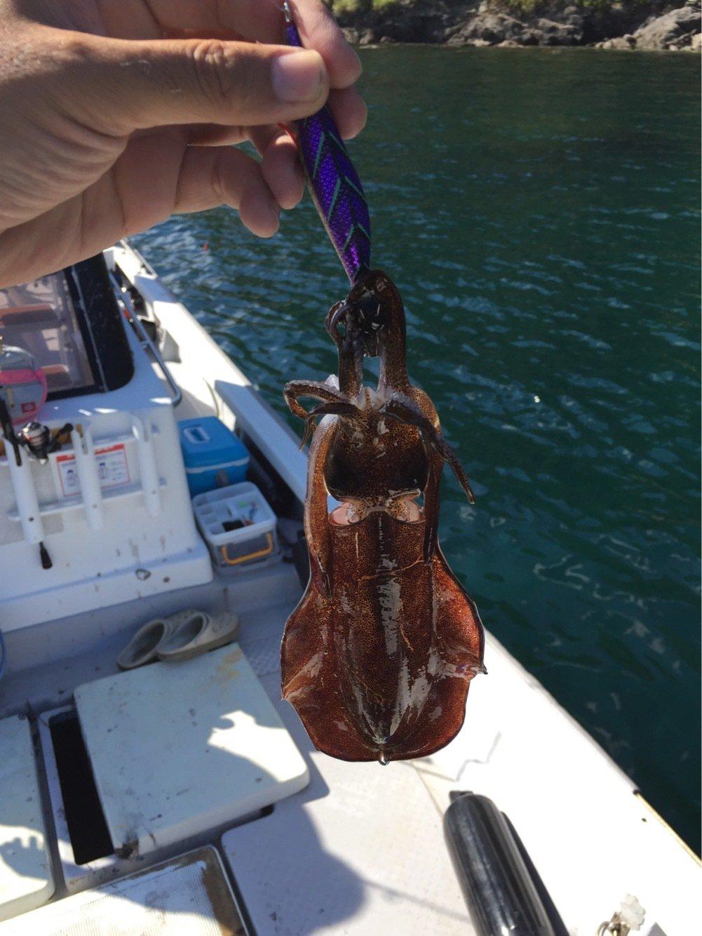 soutokuさんの投稿画像,写っている魚はアオリイカ