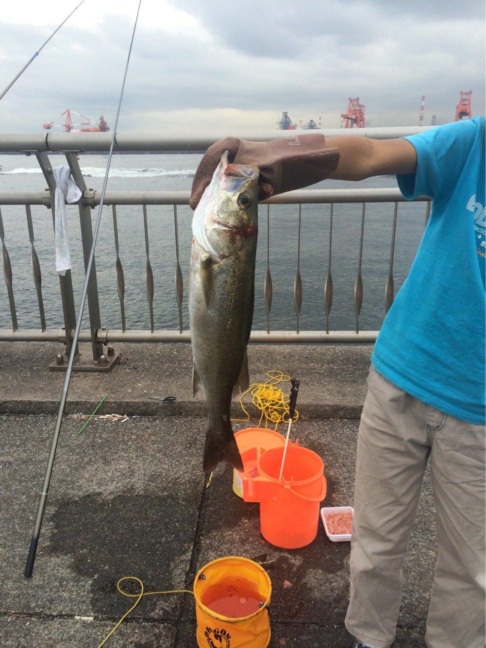 堤防釣りさんの投稿画像,写っている魚は