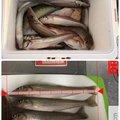 SBHさんの熊本県天草市での釣果写真