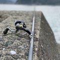 サーーラさんの高知県須崎市での釣果写真