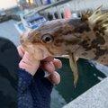 お魚屋SUNさんの大阪府泉南市での釣果写真