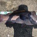 mokotinkさんの山口県下松市での釣果写真