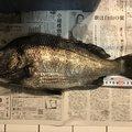 まっちゃんさんの和歌山県新宮市での釣果写真