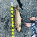 釣りバカでしさんの埼玉県川口市での釣果写真