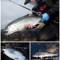 ヒ グさんの北海道爾志郡での釣果写真