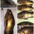 もっちゃんさんの静岡県沼津市でのメバルの釣果写真