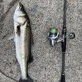 luckyさんの愛知県東海市での釣果写真