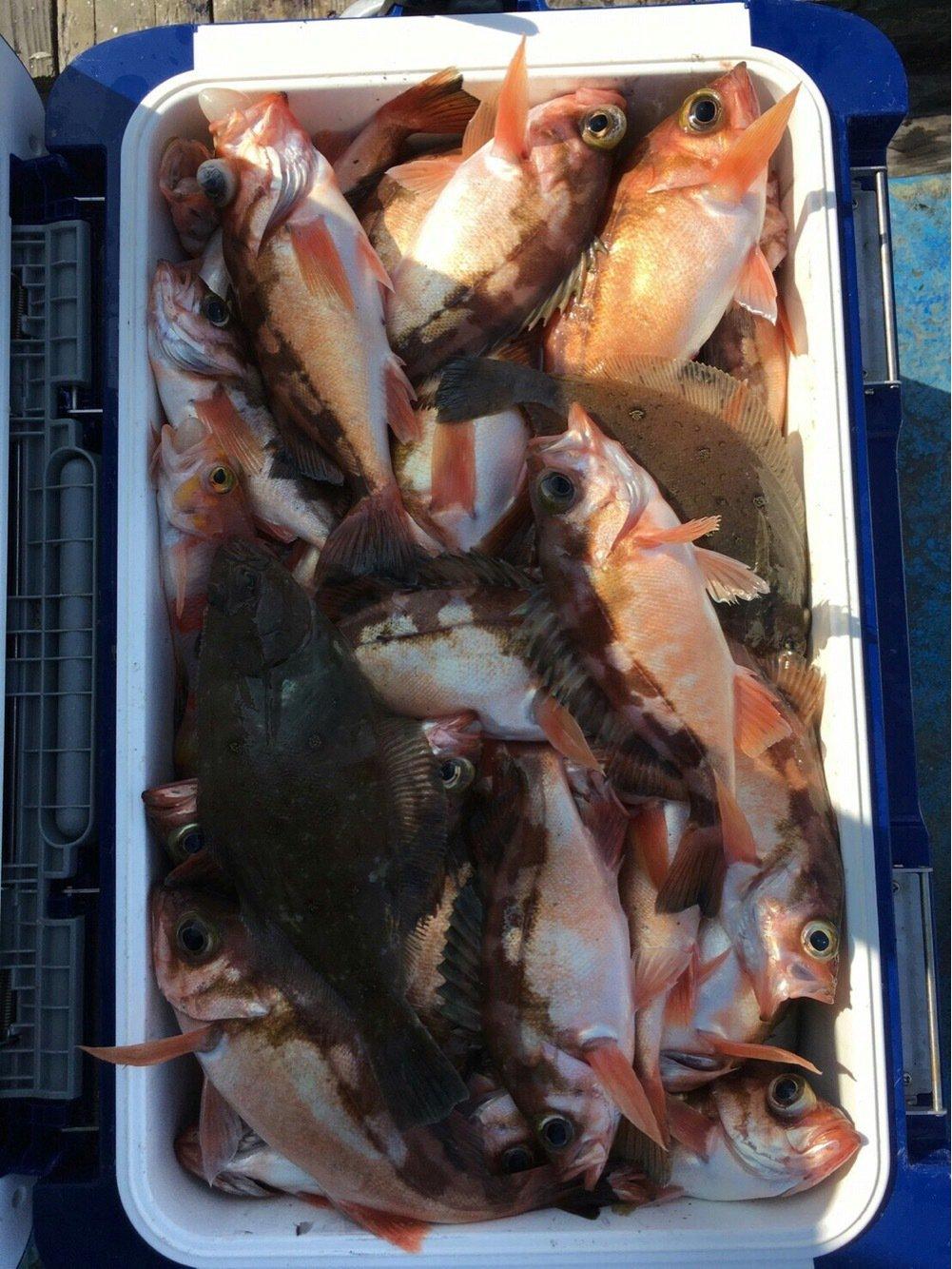 nさんの投稿画像,写っている魚はメバル