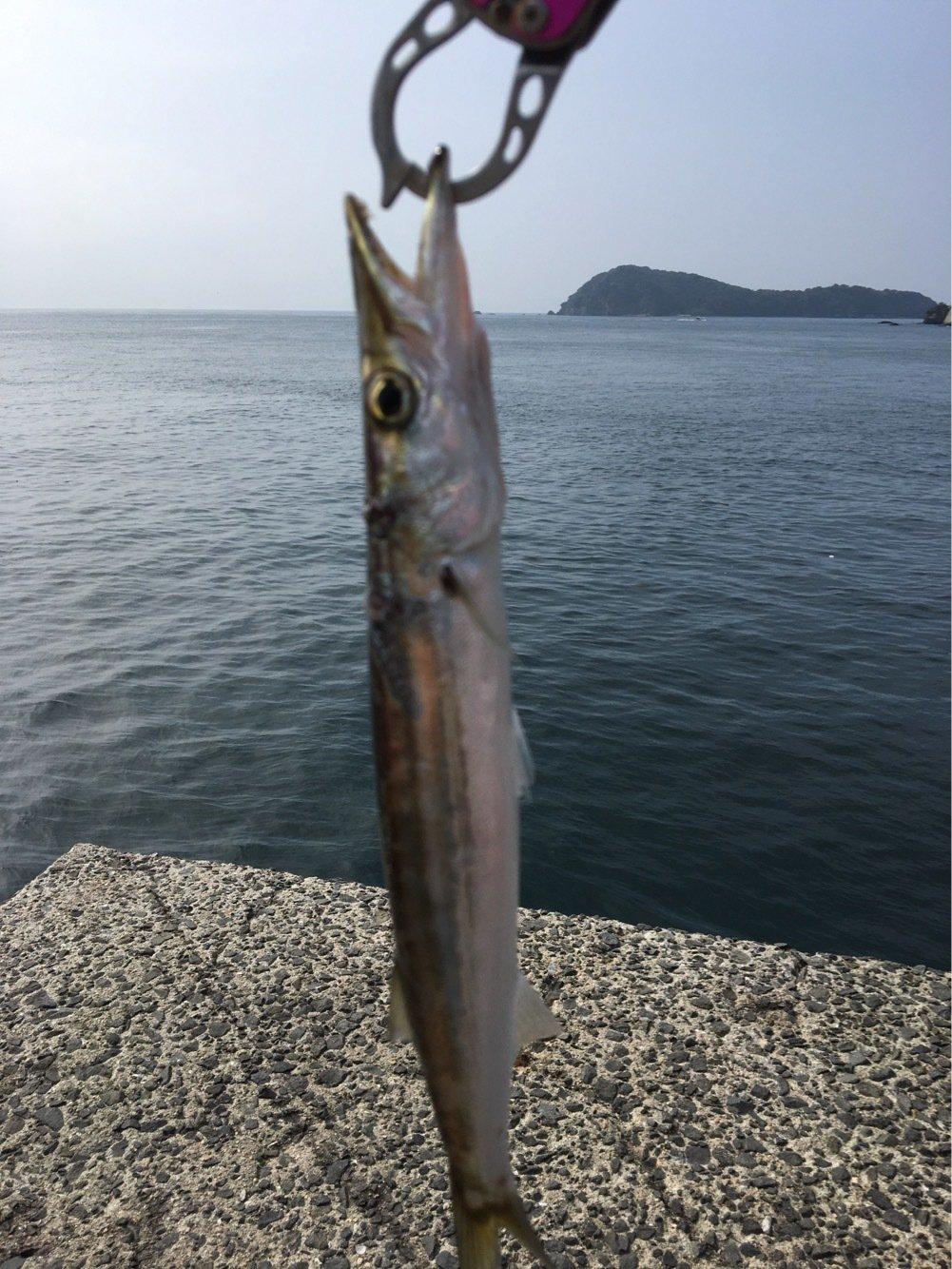 よっしーさんの投稿画像,写っている魚はカマス