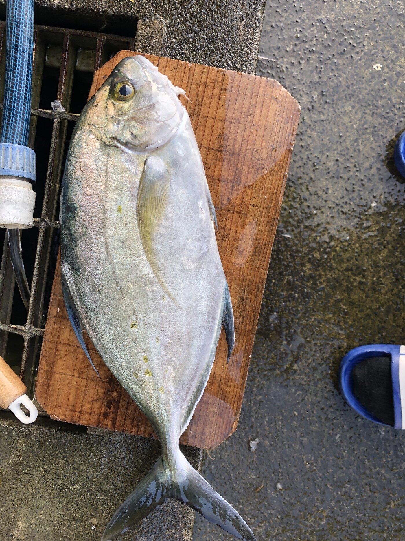 チリチリフィシッングさんの投稿画像,写っている魚は