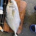 チリチリフィシッングさんの和歌山県西牟婁郡での釣果写真