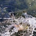 大隅カツ太郎さんの鹿児島県鹿屋市での釣果写真