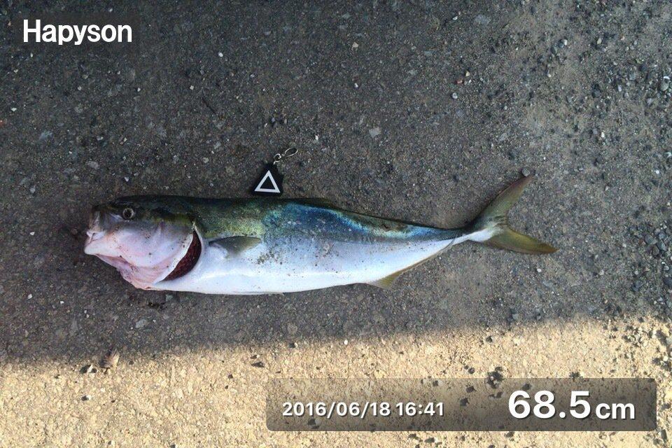 ひろゆきさんの投稿画像,写っている魚はワラサ