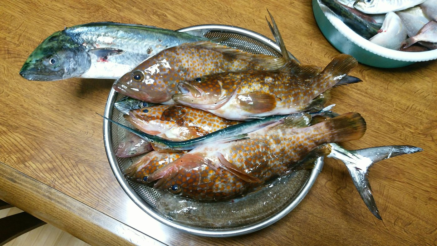 ヒロセマンさんの投稿画像,写っている魚はアコウダイ