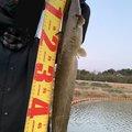 田中奏多さんの福岡県行橋市での釣果写真