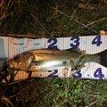大地(縁)さんの埼玉県八潮市での釣果写真