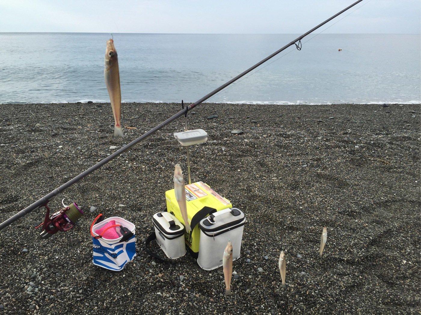 拙者の投げ釣り 山内俊彦さんの投稿画像,写っている魚はシロギス