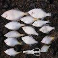 藤島亮太さんの北海道古宇郡での釣果写真