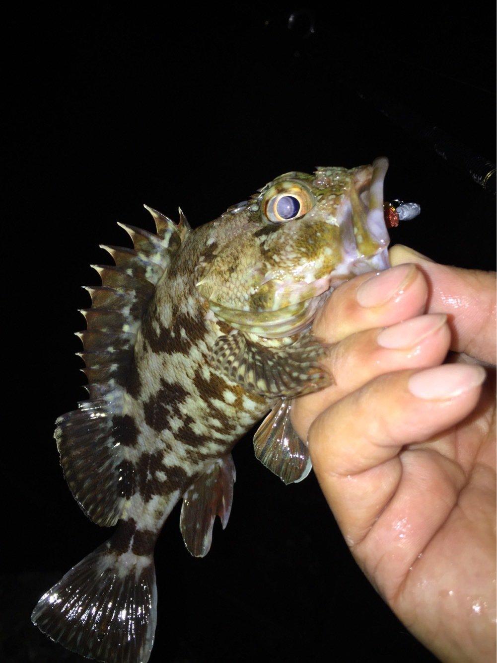 ヨシキングさんの投稿画像,写っている魚はカサゴ