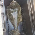 海兎さんの兵庫県姫路市での釣果写真