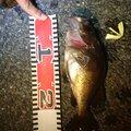 らはまさんの熊本県水俣市での釣果写真