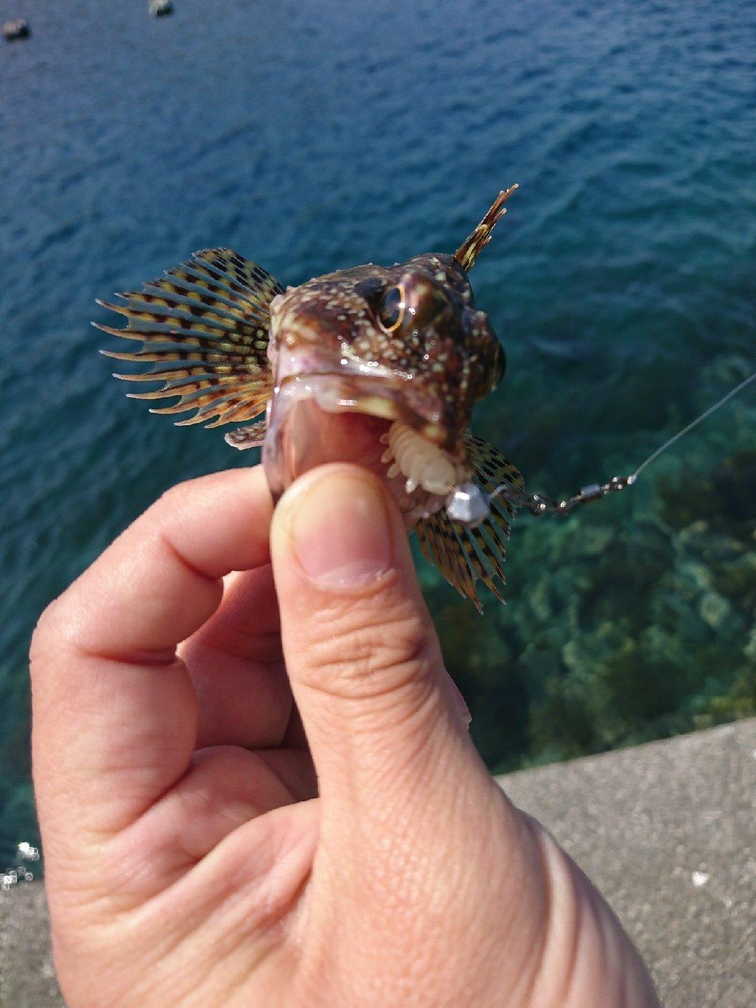 やっちゃんさんの投稿画像,写っている魚はカサゴ