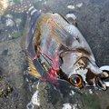 riさんの宮崎県日南市での釣果写真