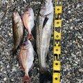 ☆肥後釣り倶楽部☆さんの熊本県天草市での釣果写真