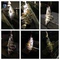 ussiさんの大阪府貝塚市での釣果写真