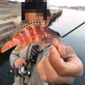 BUCCHI3さんの島根県浜田市での釣果写真