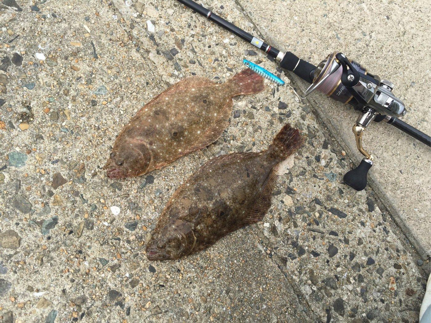 スチームボウイさんの投稿画像,写っている魚はヒラメ