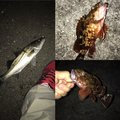 takeshiさんの静岡県静岡市でのカサゴの釣果写真