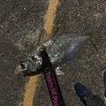 ますきーさんの長崎県雲仙市での釣果写真
